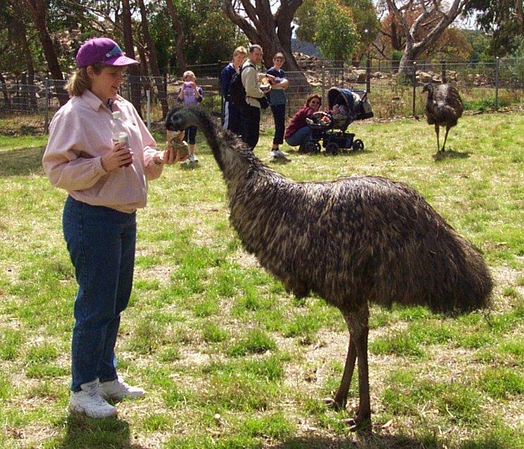 những con thú biểu tượng cho nước Úc